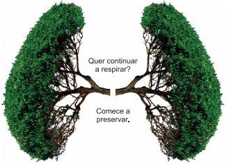 A Importância Da Preservação Do Meio Ambiente Para A Saúde é